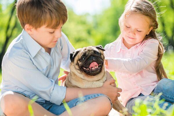 personalidad raza de perro pug