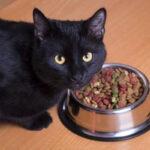 Alimentación correcta para un gato