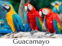guacamayo características