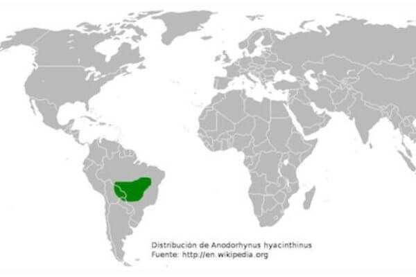 dónde vive el guacamyo azul
