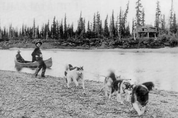 los inicios del alaska malamute