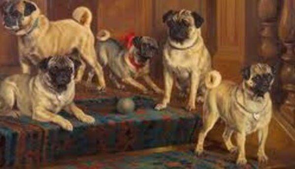 raza de perro carlino historia