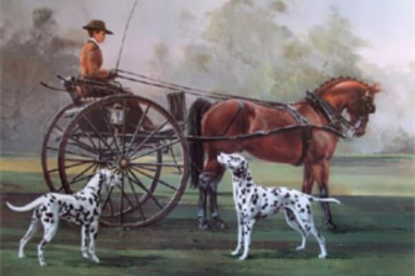 raza de perro dálmata historia