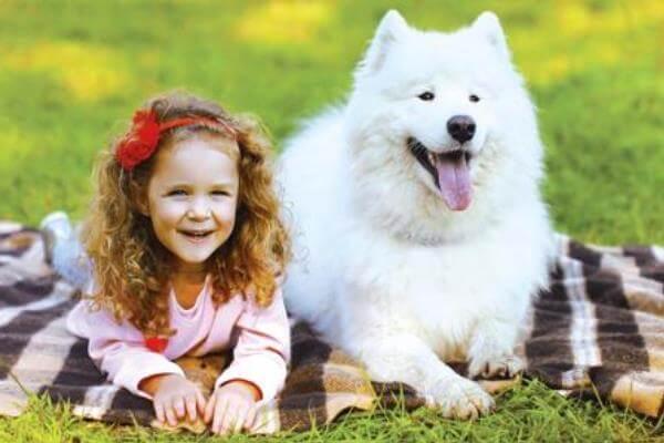 perro samoyedo y niños