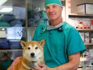 problemas de salud del perro shiba inu