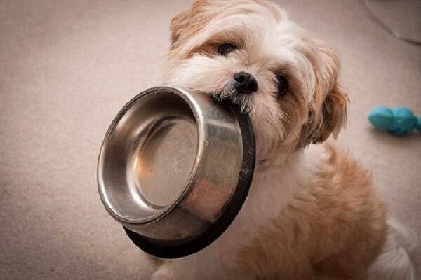 como cuidar a mi perro con trastornos intestinales