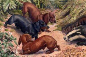 origen del perro salchicha