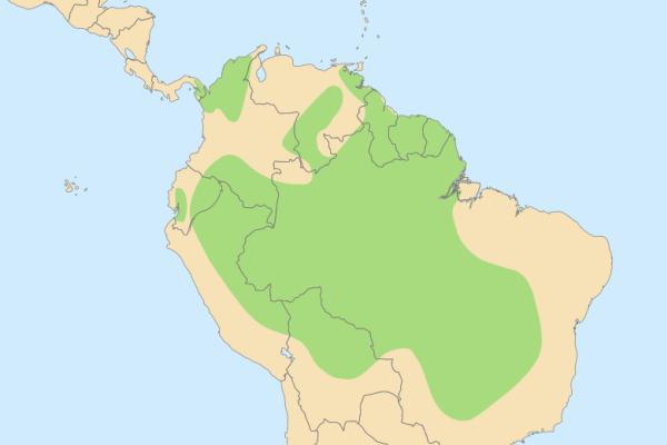 hábitat del guacamayo azul y amarillo
