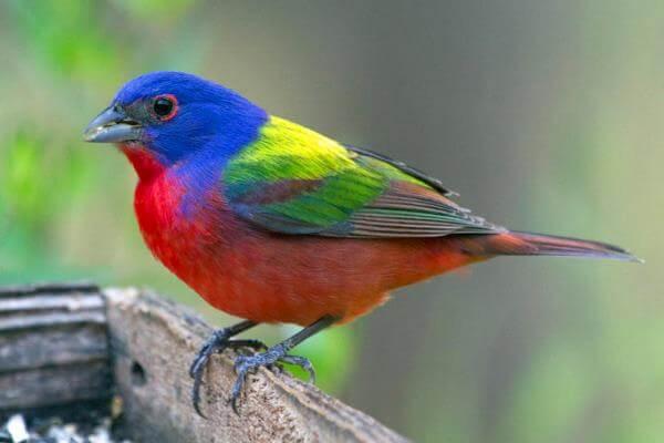 grupo aves exoticas Piciformes