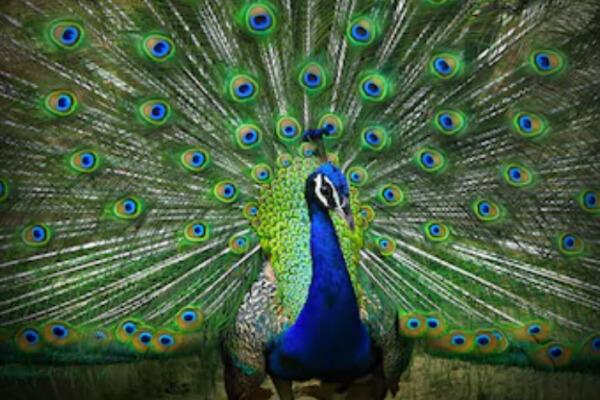 aves exóticas de colores