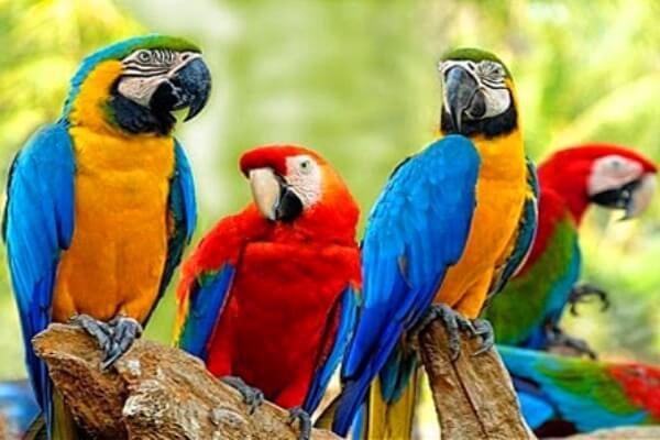 aves exóticas de compañía