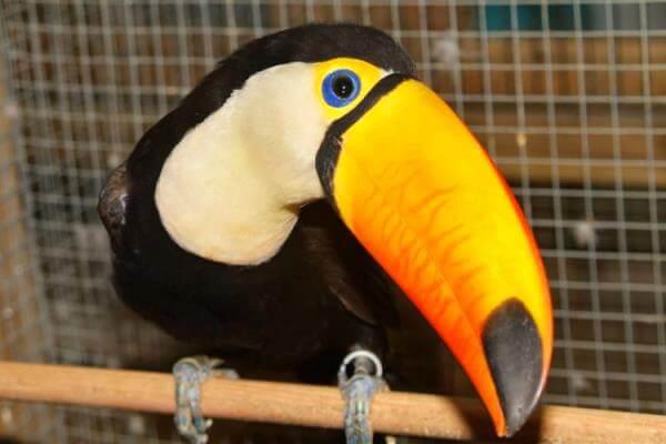 pájaros exóticos nombres