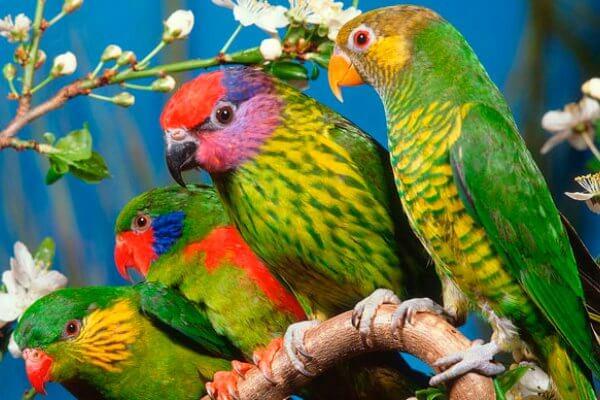 enfermedades que pueden tener las aves exóticas