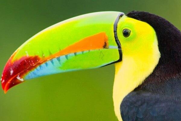 caracterisiticas aves exóticas piciformes