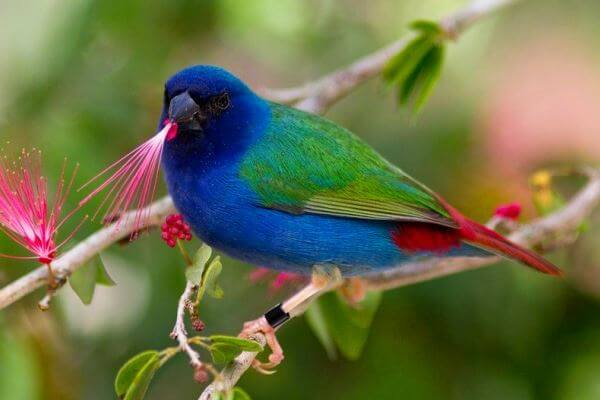 aves ornamentales exóticcas