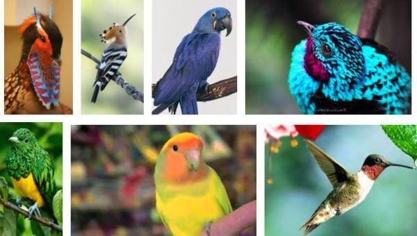 elegir el ave exótica adecuada