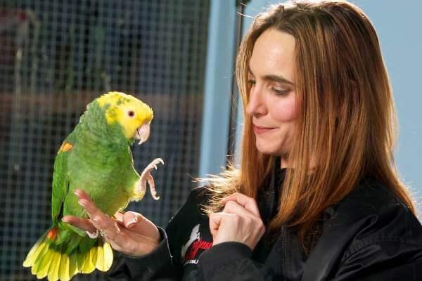 cómo atrapar a un ave exótica