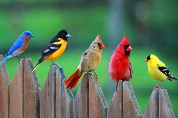 cómo se clasifican las aves exoticas