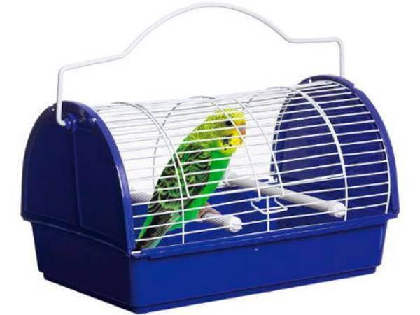 transportín para aves exóticas
