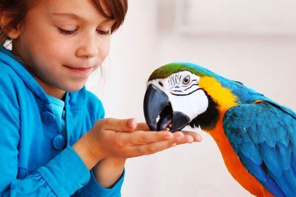 aclimatación aves exóticas