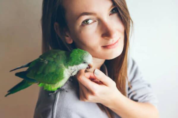 cotorra argentina como mascota ave de compañía