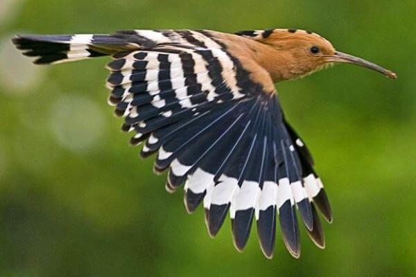 Cuánto vive un ave exótica en libertad