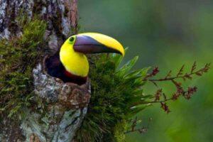 hábitat natural del tucán