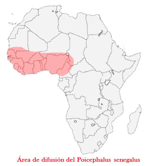 dónde vive loro de Senegal