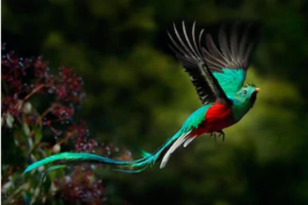 dónde viven los pájaros tropicales