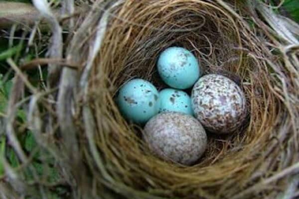 huevos de pájaros exóticos