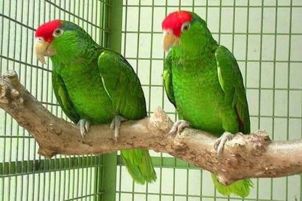 jaulas para aves exóticas