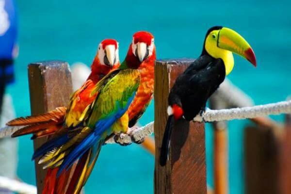 consejos para tener un ave exótica