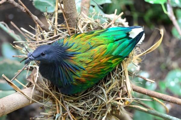 cómo hacen el nido las aves exoticas