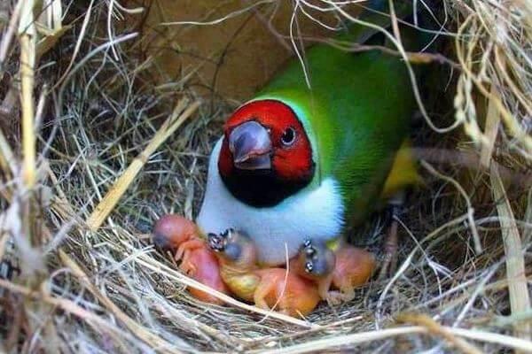 nido de pájaro tropical