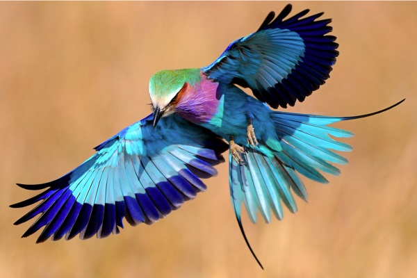 cuáles son las aves exóticas