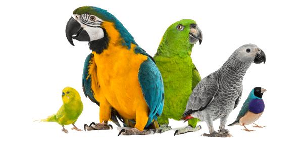 especies de aves exóticas