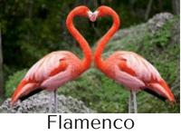 flamenco características