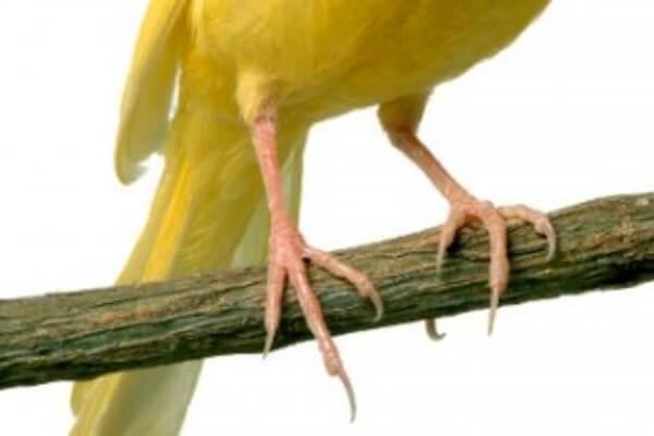 cómo recortar las uñas a un pájaro exótico