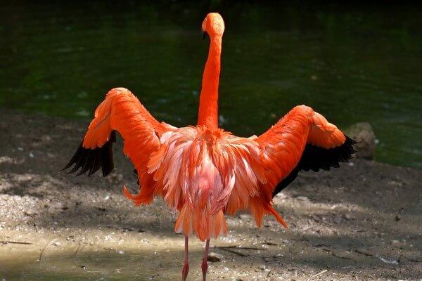 hábitat natural de los flamencos