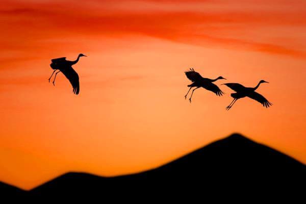 migración de la cigüeña