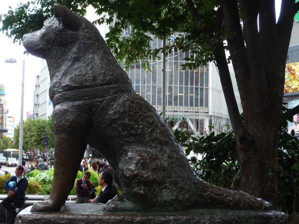 origenes raza akita japonés