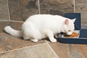 qué come el gato angora