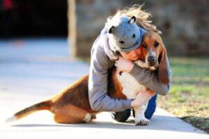 descripción basset hound