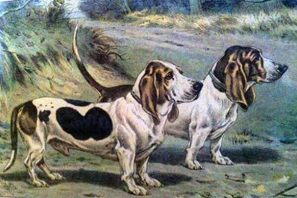 historia y origen basset hound