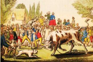 perro Staffie historia