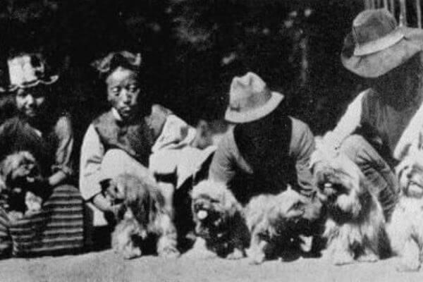 cuál es sla historia raza perro lhasa apso