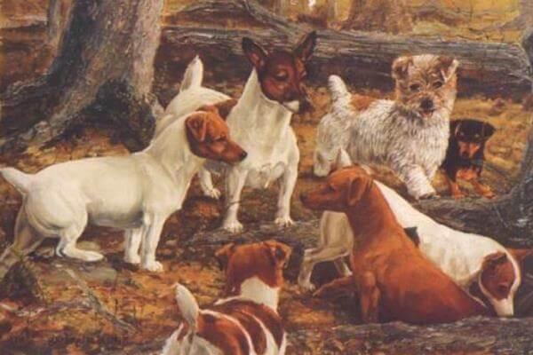 Origen e Historia de la raza Jack Russell Terrier