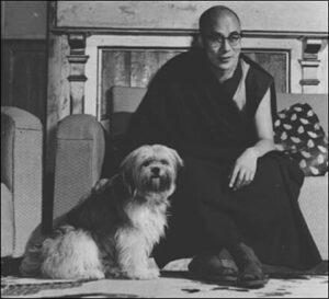 cuál es el origen raza perro lhasa apso