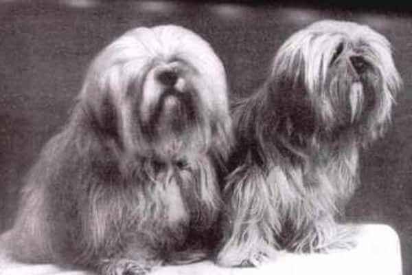 procedencia raza de perro lhasa apso
