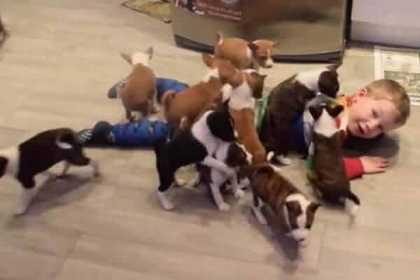 comportamiento perro basenji con los niños
